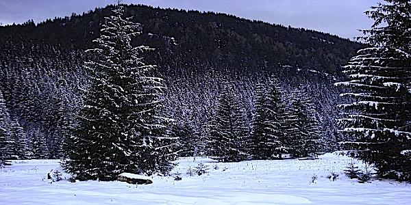 Jasna ski property slovakia