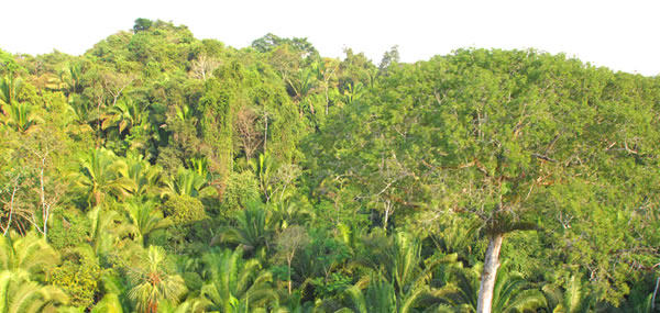 belize reserve eco property