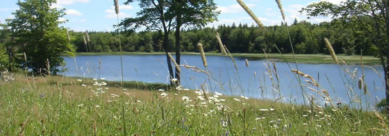 Atlantic Canada Forest Lakes